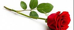 Rosenverkauf der SMV